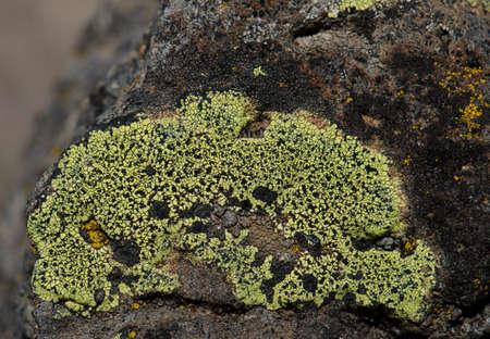 Map lichen Rhizocarpon geographicum on a rock. The Nublo Rural Park. Tejeda. Gran Canaria. Canary Islands. Spain.