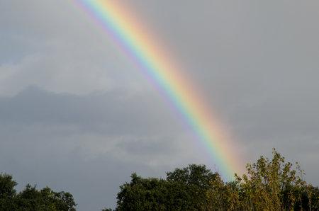 Rainbow over a forest in Malpartida de Plasencia. Caceres. Extremadura. Spain.