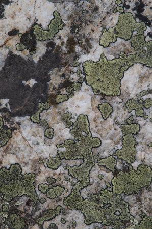 Map lichen Rhizocarpon geographicum on a rock. Monfrague National Park. Caceres. Extremadura. Spain.