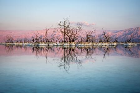 Het zoute water van de dode zee heeft van deze bomen fossielen gemaakt Stockfoto