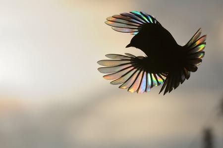파이어 버드. 작은 깃털에 태양 광선의 회절와 참새목. 위대한 짹 Parus 주요 스톡 콘텐츠