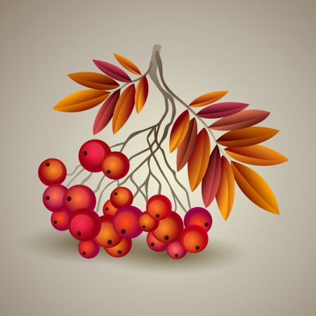 Autumnal colorful red rowan branch. Vector illustration Vector