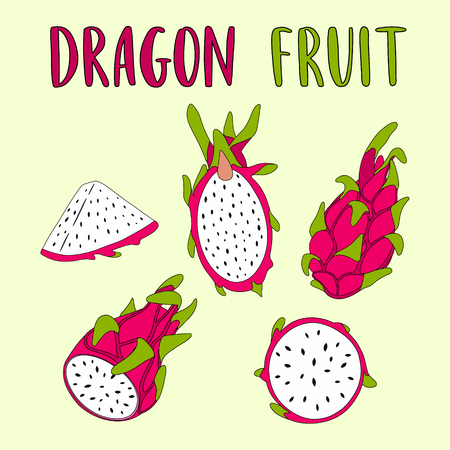Whole and sliced Dragon Fruit isolated on light background. Hand drawn vector illustration. Illustration