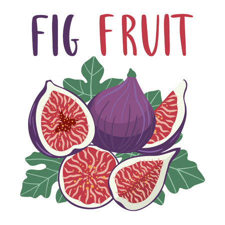 Bright set of colorful half, slice and whole of juicy fig fruit. Cartoon figs illustration with lettering isolated on white background. Logo for juice or jam.