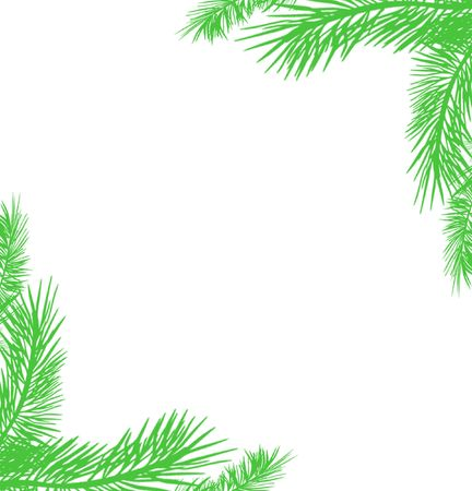 green christmas tree branches on white background