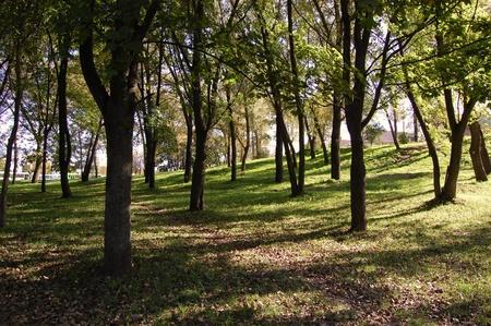 緑の木々 とシティ パーク 写真素材