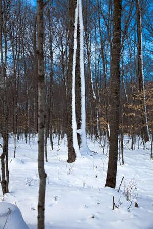 michigan snow: Snow on Woods Stock Photo