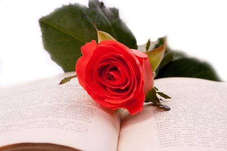 Scarlet Rose is an open book photo