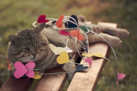a Cat sitting on multicolored paper hearts photo