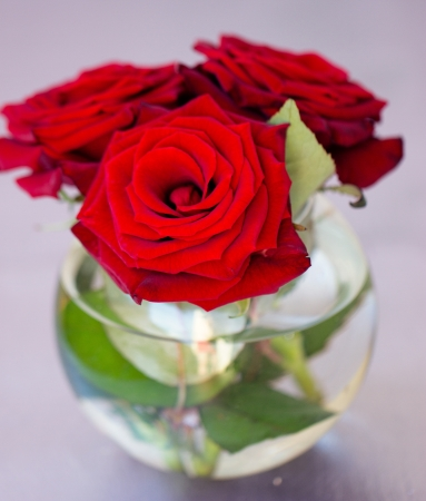 Vase of Roses on Table Vase With Red Roses on The