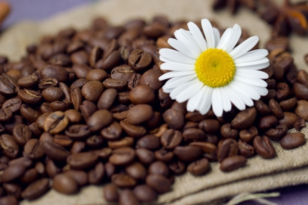 coffee beans with chamomile photo