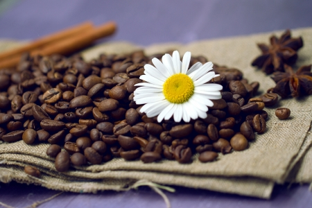 coffee beans with chamomile Stock Photo - 17311086