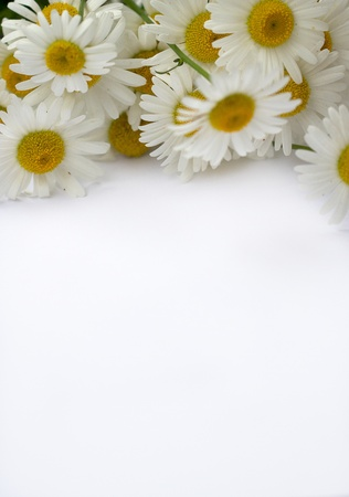 Paper banner with flower chamomile, a white Stock Photo - 17329650