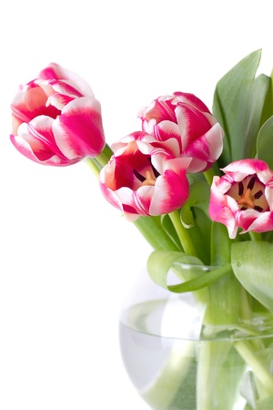 Bouquet of red tulips. isolated on white background photo