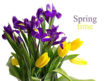 Yellow tulips and blue irises