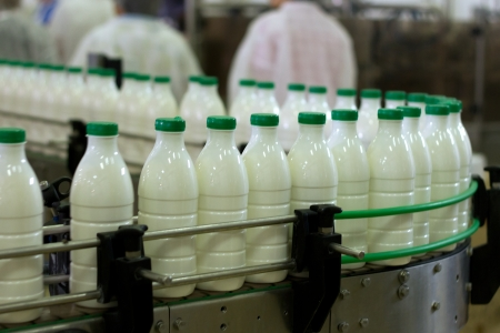 product packaging: Dairy Plant. Conveyor with milk  bottles.