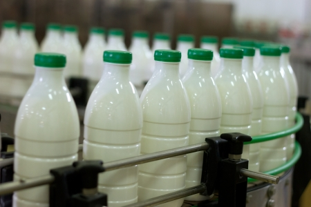 filling equipment: Dairy Plant. Conveyor with milk  bottles.