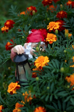 Garden Gnome lantern hidden in Marigolds photo