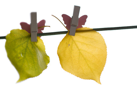 different autumn leaves hanged on the clothesline photo