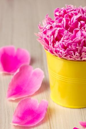 Pink roses on vintage background photo