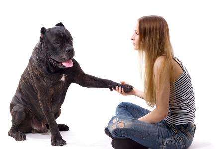 cane corso: She teaches her dog Cane Corso team give paw. isolate Stock Photo