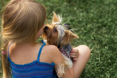 yorkie: Girl 6 years old on  grass playing with a Yorkshire Terrier Stock Photo