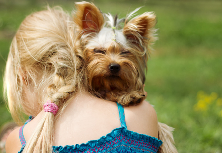 6 year old: Yorkshire terrier on the shoulder of 6 year old girl. looking into the camera Stock Photo