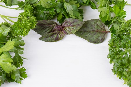 Fresh herbs frame : parsley, dill, celery, thyme, marjoram lovage tarragon sage place for text