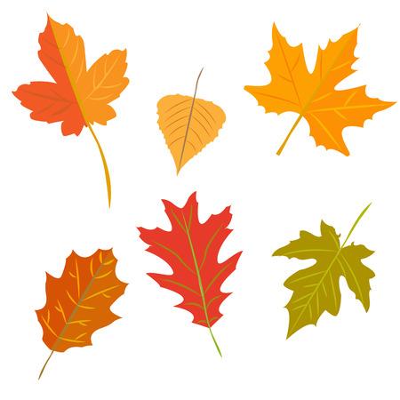 Autumn leaves set, isolated on white background, simple cartoon flat style, vector illustration. Illustration