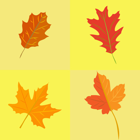 Autumn leaves set on yellow background.