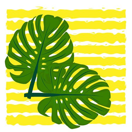 Vector illustration. Monstera tropical plant leaves on the background of horizontal yellow stripes
