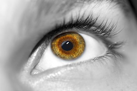 Bild der braunen Auge des Menschen hautnah.