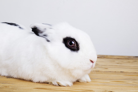White rabbit on the white background in the studio Stock Photo