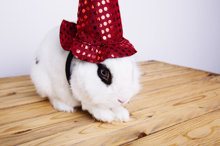 White rabbit hat for a witch on the white background in the studio