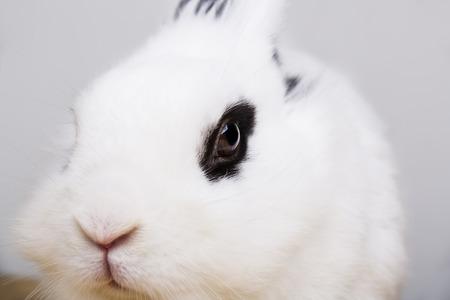 White rabbit on the white background in the studio Stock Photo