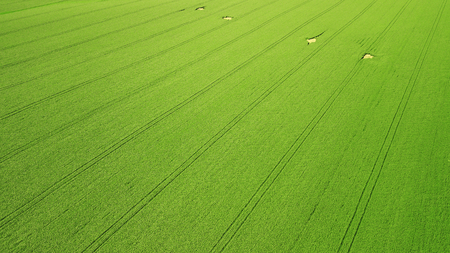 Aerial view. Agriculture green field from above Reklamní fotografie