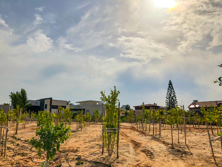 Newly planted trees on a farm are watered with a irrigation system seeking efficiency in a time of drought in Israel.