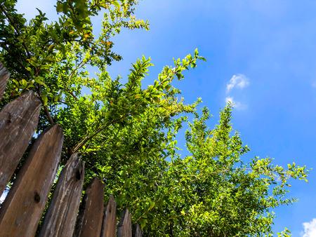 Close-up of vertical simple oak wooden fence background on sky background. Banque d'images - 105146121