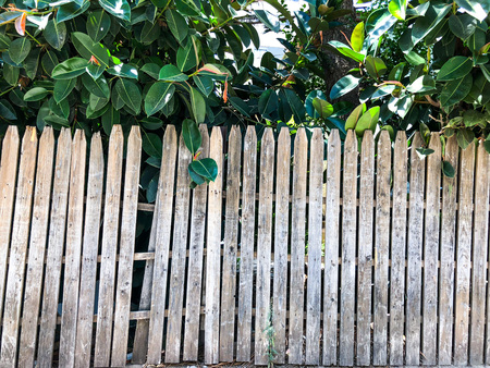 Close-up of vertical simple oak wooden fence background. Old knotted timber wall. Vintage rustic pattern. Banque d'images - 105146524