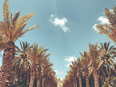 A lot of palm trees in Gan Ha'ir park in Rishon Le Zion, Israel. Stok Fotoğraf