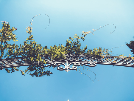Entrance to the botanic garden in Tbilisi. Beautiful iron gate against the blue sky. Summer day in the city.