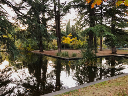 Autumn in the park, trees, reeds near the pond, reflection of trees in a pond. Falling foliage. Colors of autumn.