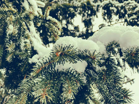 Sprig of a tree, Christmas trees in the snow. Snow on the street of the city. The beginning of winter in Bakuriani.