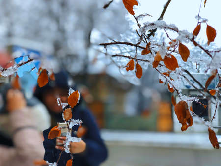 Sprig of a tree, leaves in the snow. Snow on the street of the city. The beginning of winter in Bakuriani. Standard-Bild