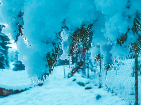 Sprig of spruce with icicles. Beautiful view of the snowy landscape. The beginning of winter in Bakuriani. Standard-Bild