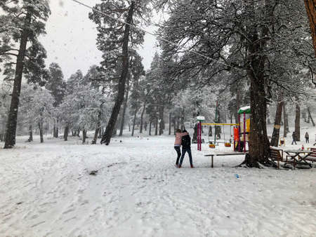 Snowfall. Children walk in the snow. Trees in the snow. Mountain ski resort Bakuriani. Imagens
