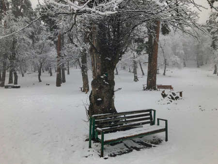 Bench in the snow under a tree. Snowfall. Trees in the snow. Mountain ski resort Bakuriani. Imagens