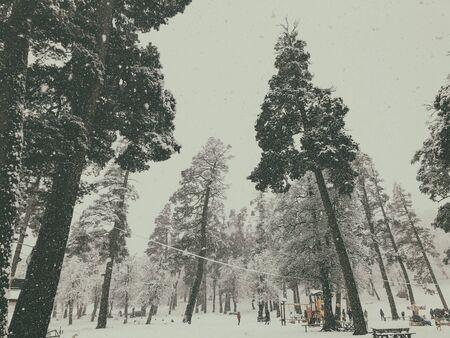 Snowfall. Children walk in the snow. Trees in the snow. Mountain ski resort Bakuriani. Imagens - 150550115