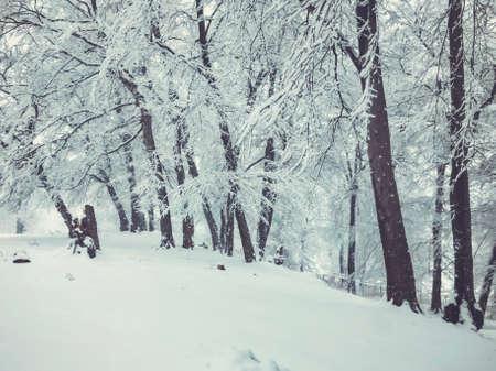 Snowfall. Trees in the snow. Mountain ski resort Bakuriani. Imagens