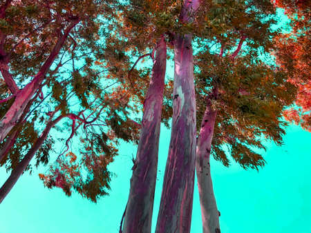 green tree against the blue sky. Bright blue sky. Imagens - 150636345